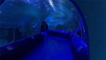 Аквариум туннеліне арналған 180 немесе 90 градустық акрил панелдері