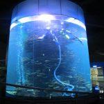 акрилге арналған акрилді цилиндр үлкен аквариум немесе мұхит паркі