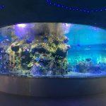 зауыттық балық аулауға арналған шыны ыдыстар, дөңгелек стақан аквариумдар