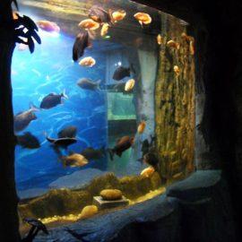 2018 аквариум терезесінің жоғарғы сапалы акрил панелі