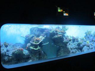 Жасанды акрил цилиндрлік мөлдір балық аквариумы / терезесі