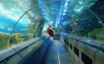 Акрилді туннель