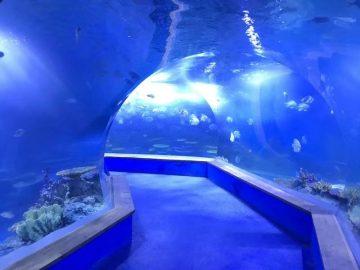 Ашық акрилді тазарту Аквариумның үлкен пластик туннелі