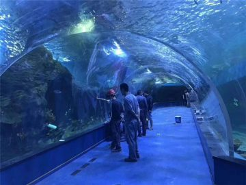 Арнайы плексилл акрил туннелінің аквариумы