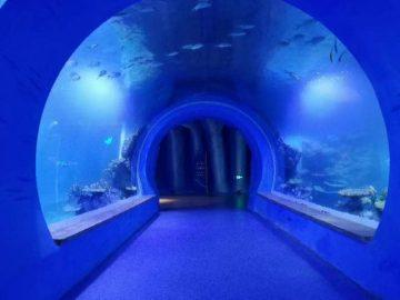 Түрлі пішіндегі жоғары акрил туннелінің аквариумы